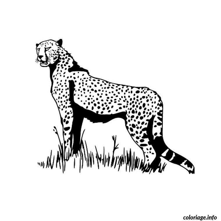 animaux savane coloriage 70