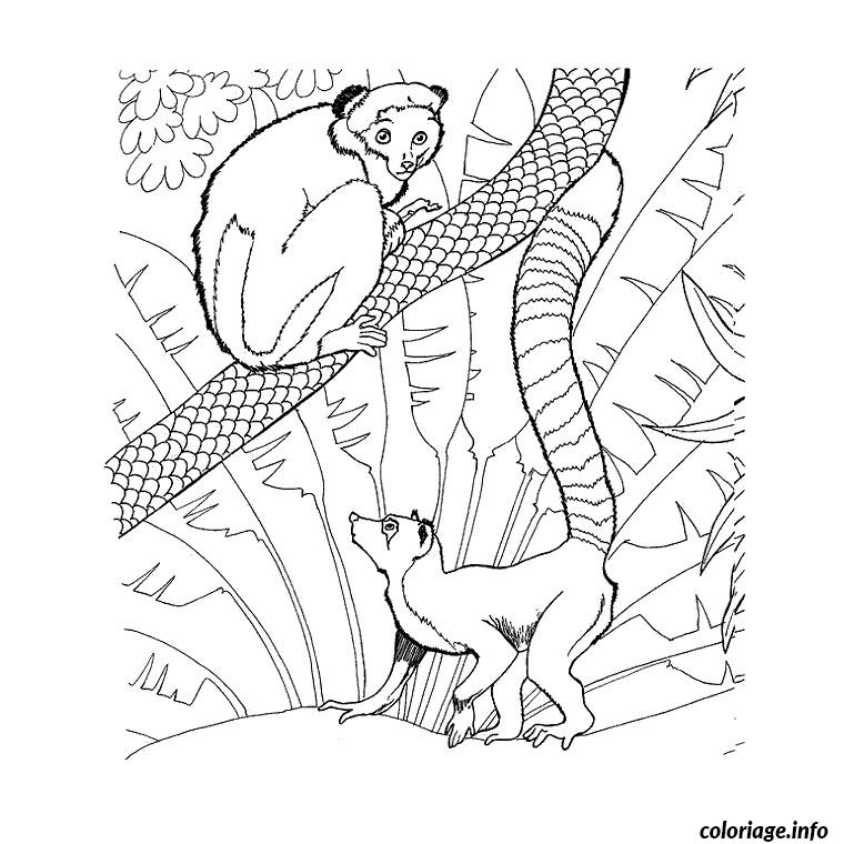 Coloriage Animaux Du Zoo Jecolorie Com