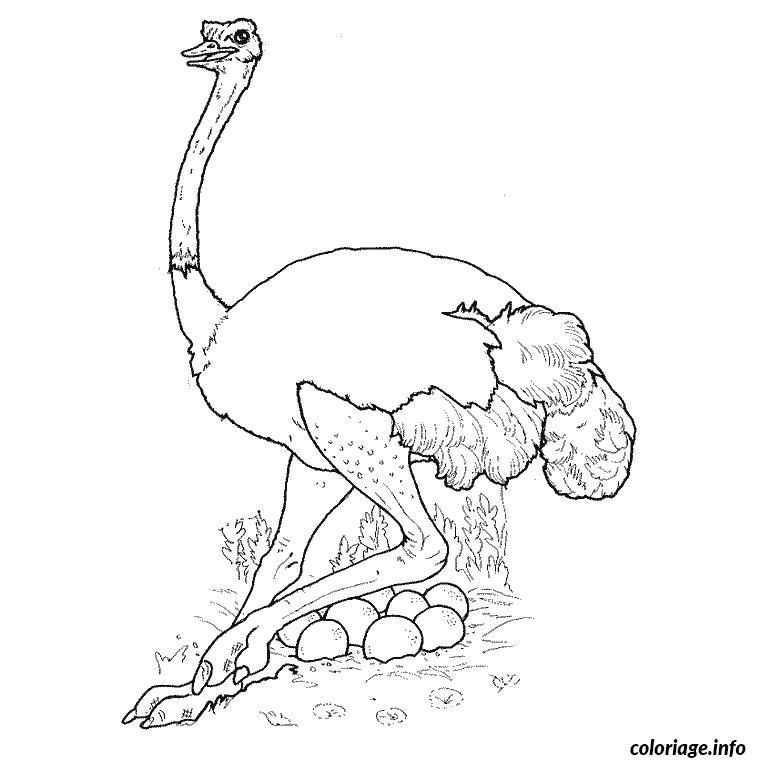 Coloriage Animaux Dafrique.Coloriage Animaux D Afrique Jecolorie Com