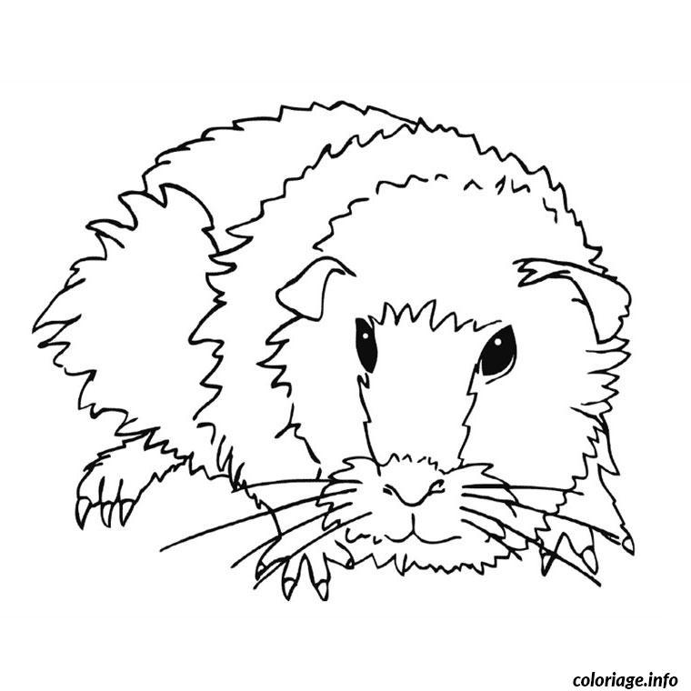 Coloriage Cochon D Inde dessin