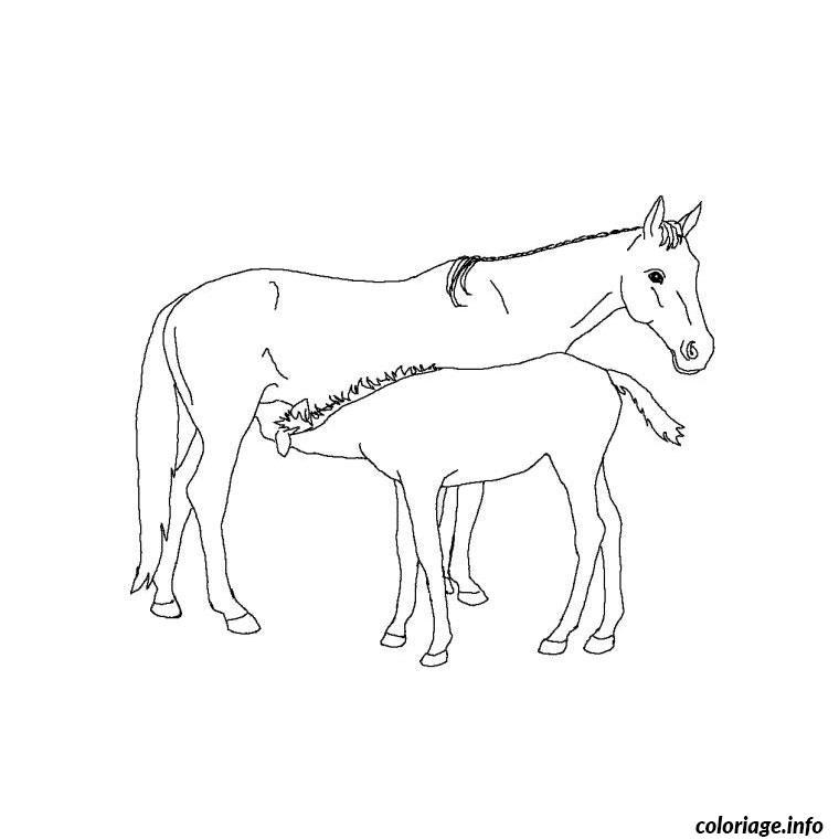 Coloriage chevaux poulain dessin - Chevaux a colorier et a imprimer ...