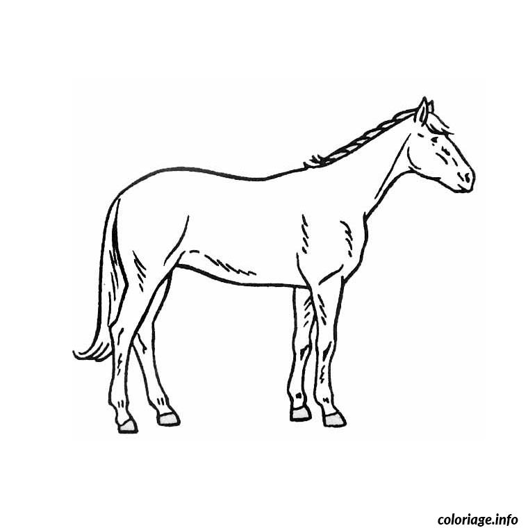 dessin cheval trait