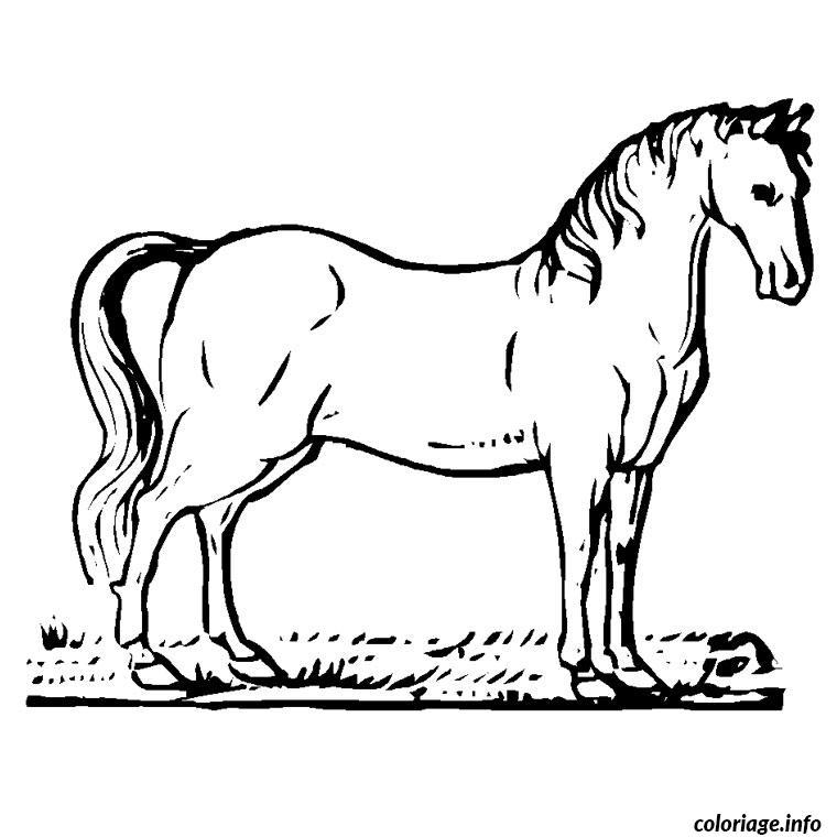 Coloriage chevaux arabe - Dessin de chevale ...