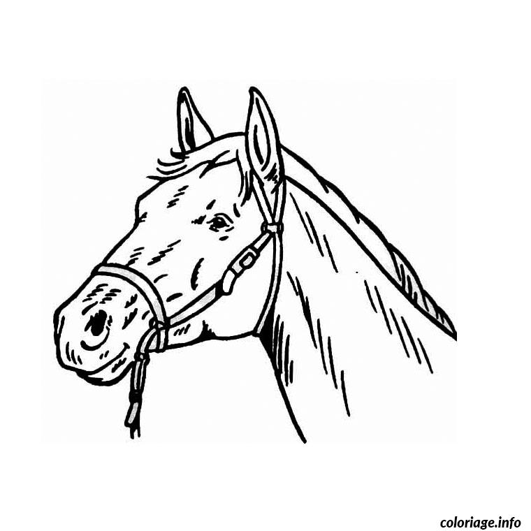 Coloriage tete de cheval dessin - Dessin facile de cheval ...