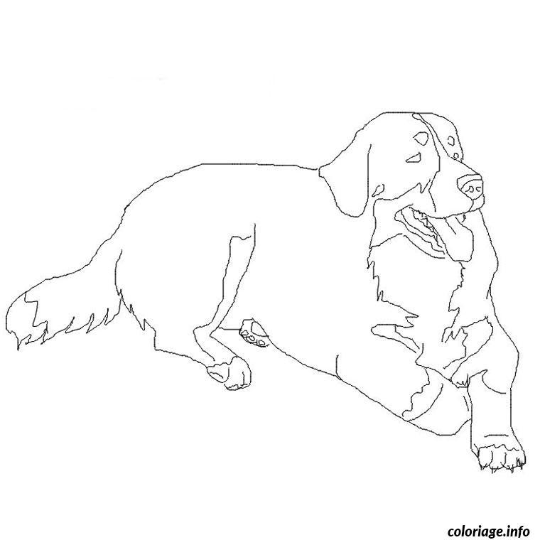 Dessin chien bouvier bernois Coloriage Gratuit à Imprimer