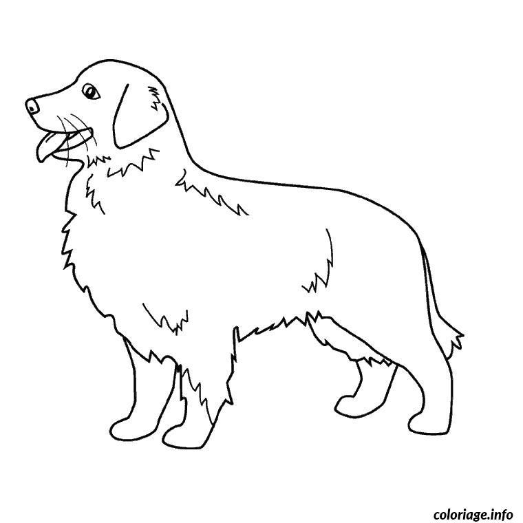 coloriage chien golden retriever dessin imprimer - Coloriage Chien