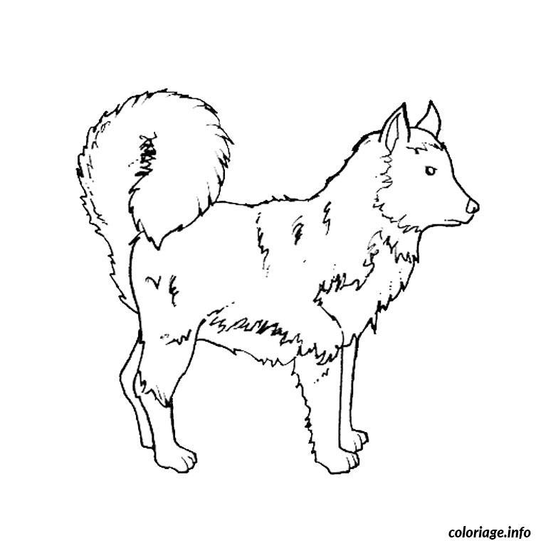 Coloriage chiot husky dessin - Coloriage chien de traineau ...