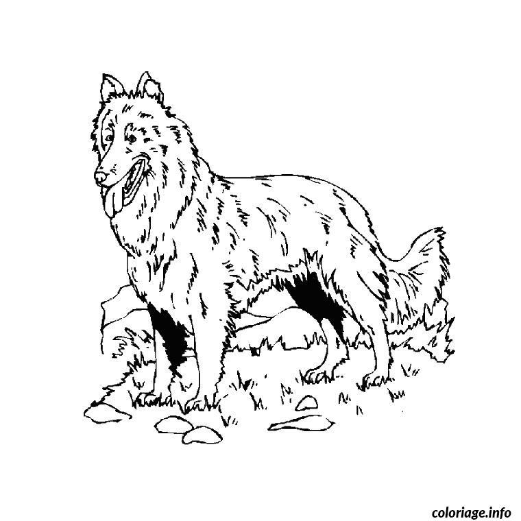 Dessin chien de berger Coloriage Gratuit à Imprimer