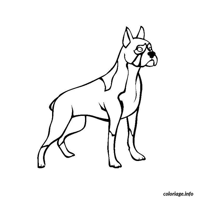 Coloriage chien boxer dessin - Coloriage de chien boxer ...