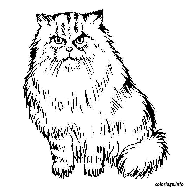 Coloriage Chat Maine Coon.Coloriage Chaton Persan Dessin