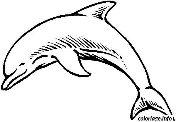 Coloriage bebe dauphin dessin - Images dauphins a imprimer ...