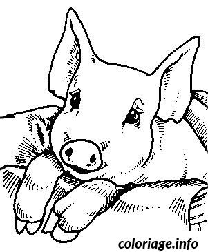 Coloriage bebe cochon - Cochon a dessiner ...