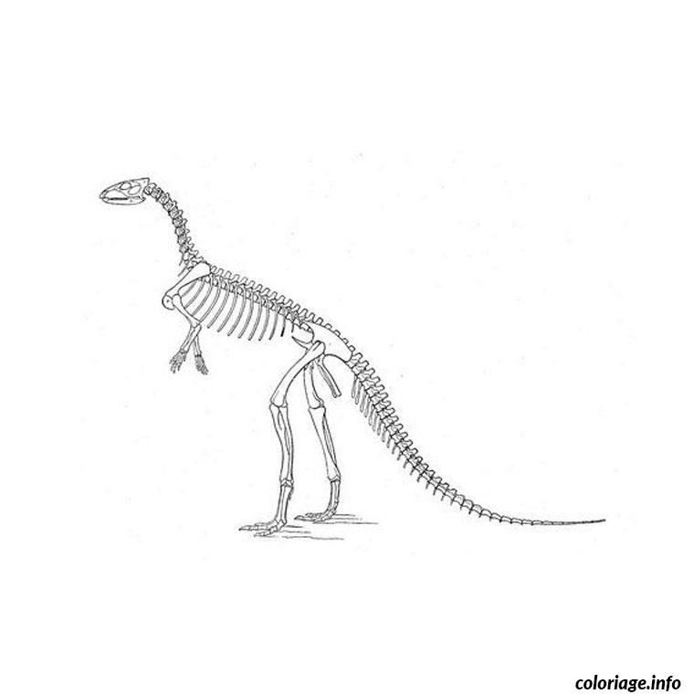 Coloriage Squelette Dinosaure dessin