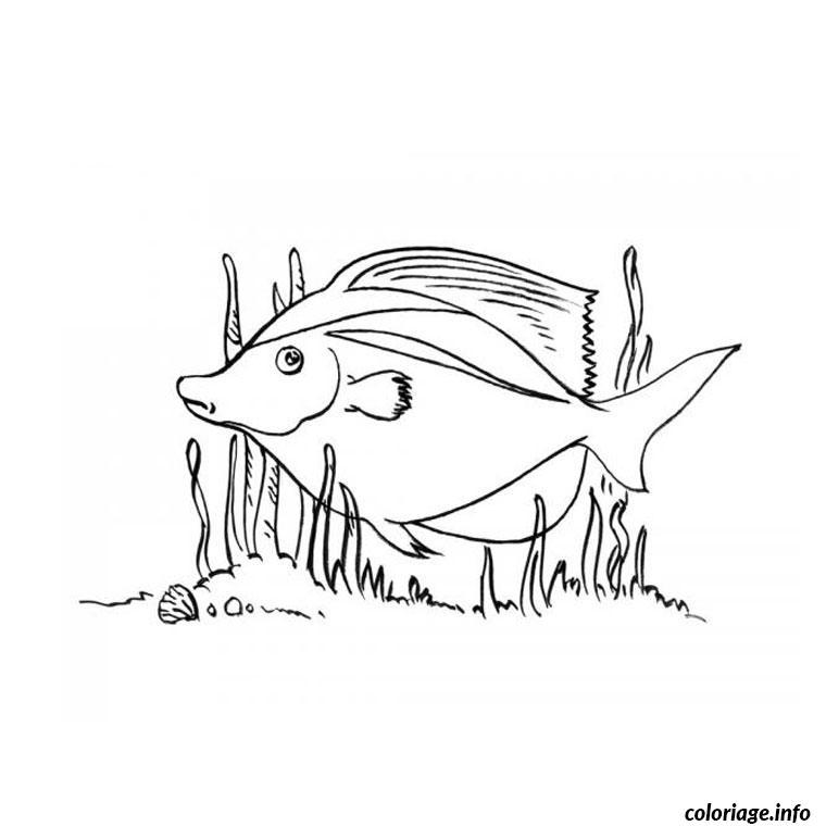 Coloriage poisson exotique - Coloriage de poisson a imprimer ...