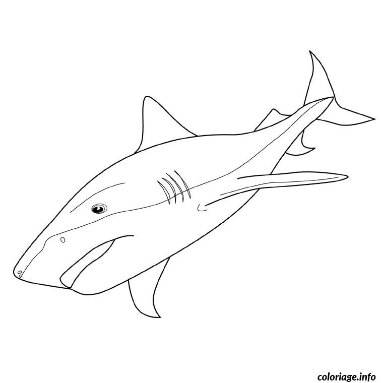 Coloriage requin tigre dessin - Requin en dessin ...