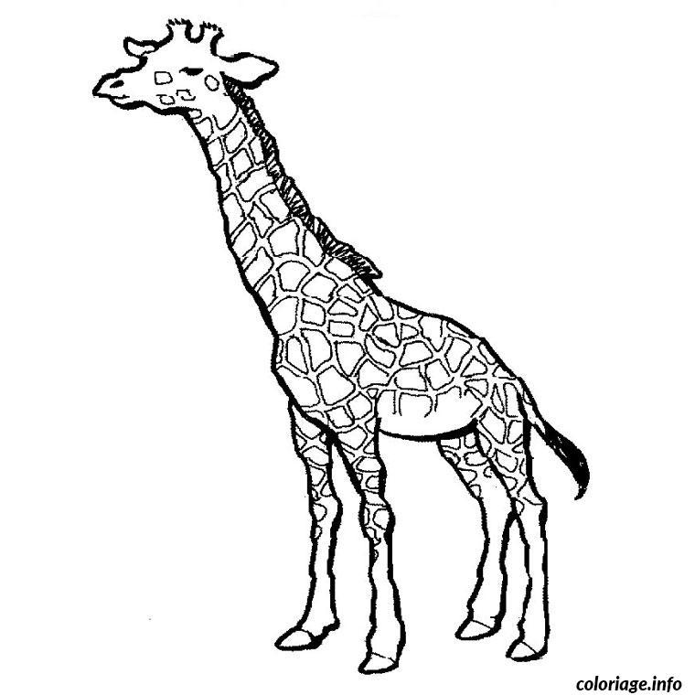Coloriage Girafe Dessin Animaux à imprimer