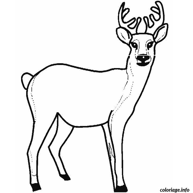 Coloriage cerf - Comment dessiner un cerf ...