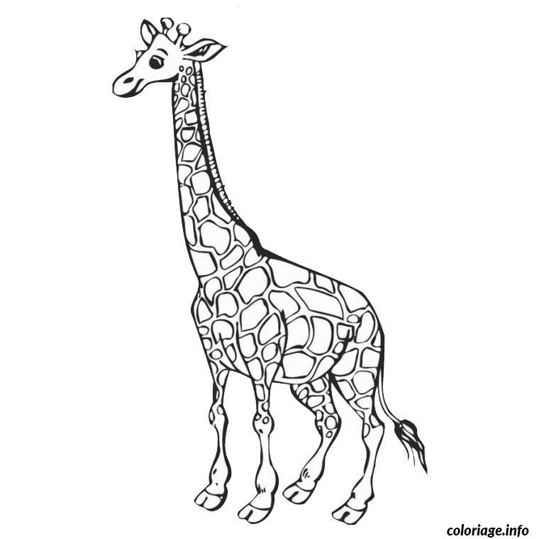Coloriage Adulte Animaux Girafe Bondless