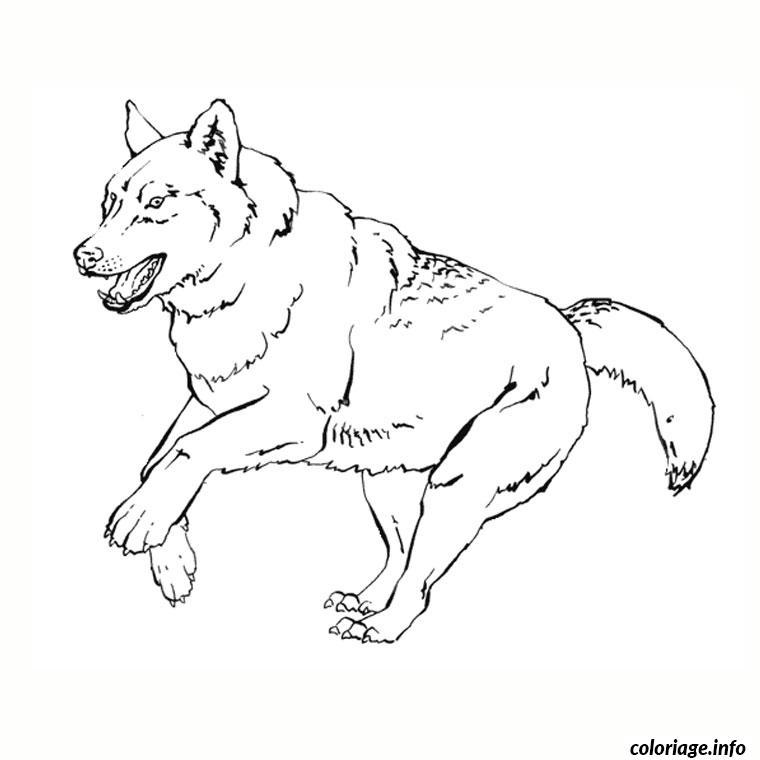 Coloriage Loup Blanc Jecolorie Com