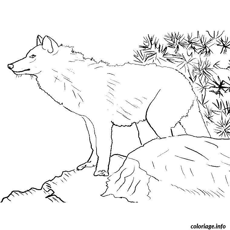 Coloriage Loup Dessin Animaux A Imprimer