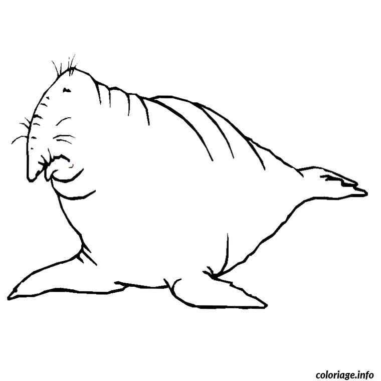 Coloriage elephant de mer dessin - Elephant a imprimer ...