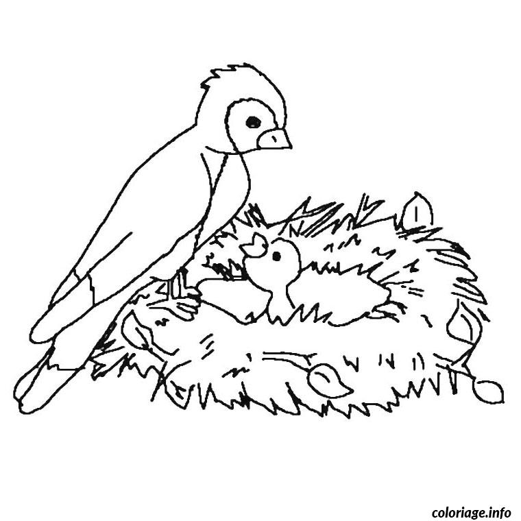 Coloriage nid oiseau dessin - Dessin d oiseau ...