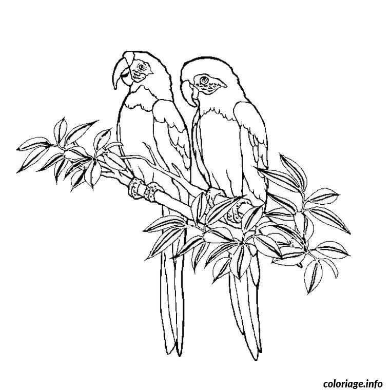 Coloriage Oiseaux Dessin Animaux A Imprimer