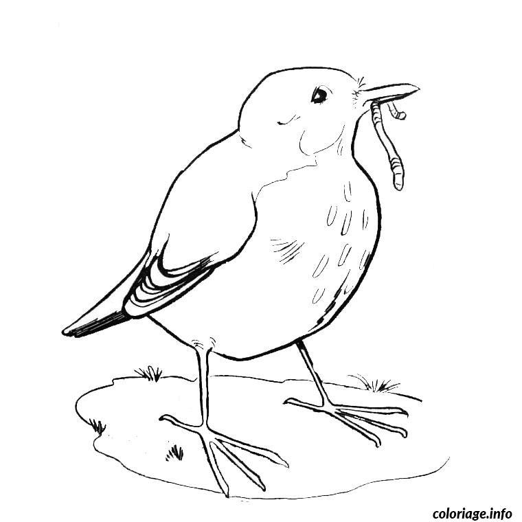 Coloriage oiseau pinson - Dessin d oiseau ...