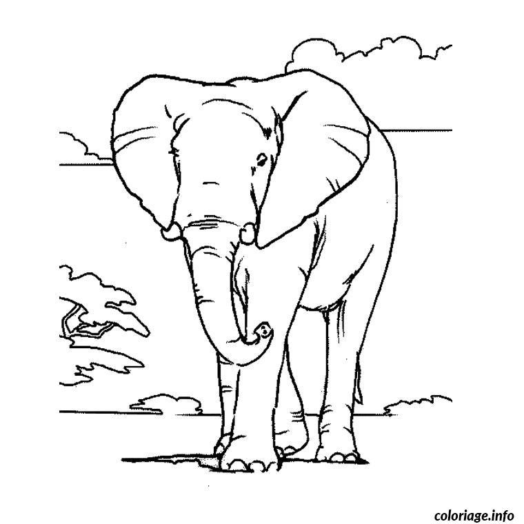 elephant d afrique coloriage