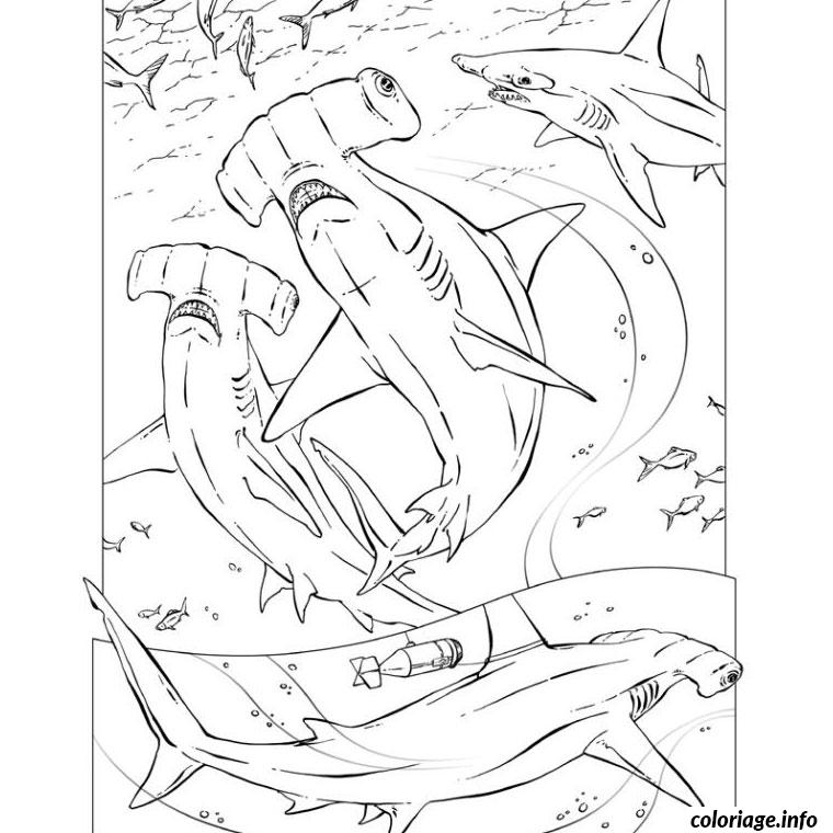 Coloriage requin marteau - Dessin de marteau ...