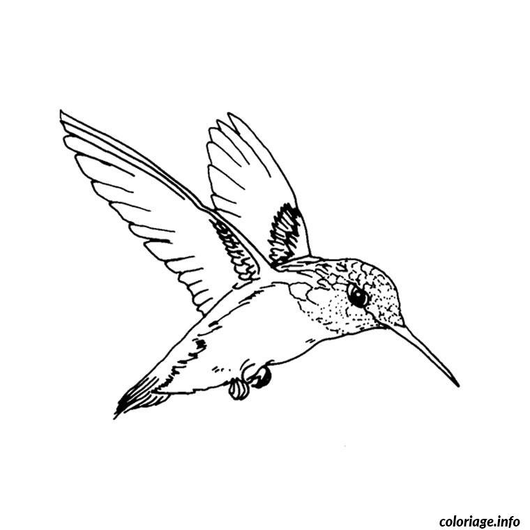 Coloriage A Imprimer Princesse Qui Vole.Coloriage Oiseau Qui Vole Dessin