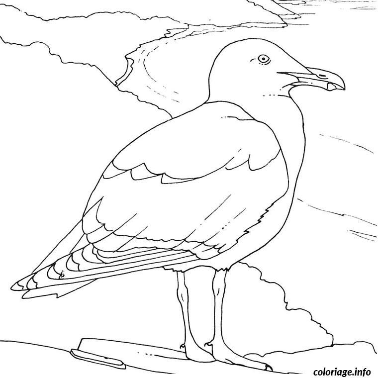 Coloriage Oiseaux De Mer Dessin