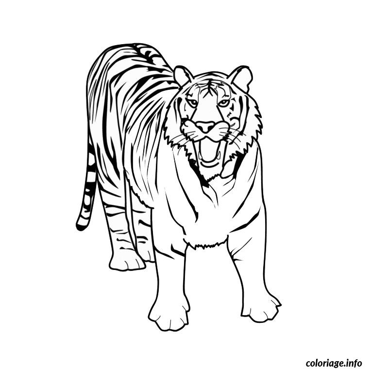 Coloriage tigre blanc - Image dessin tigre ...