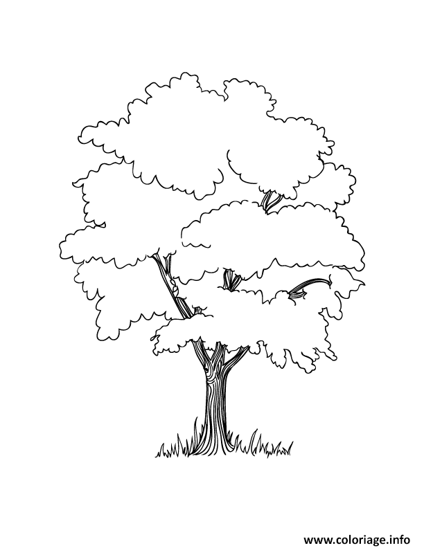 Dessin arbre 42 Coloriage Gratuit à Imprimer