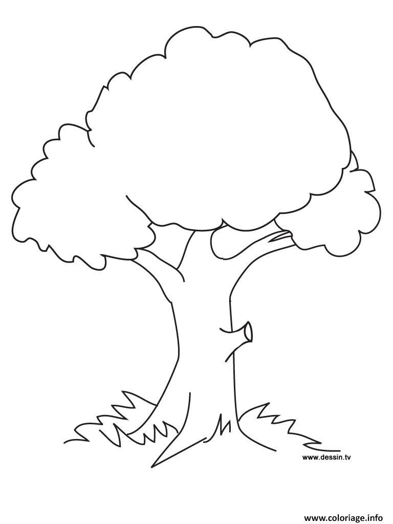 Dessin arbre 1 Coloriage Gratuit à Imprimer