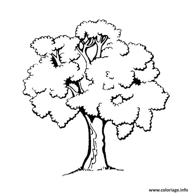 Dessin arbre Coloriage Gratuit à Imprimer