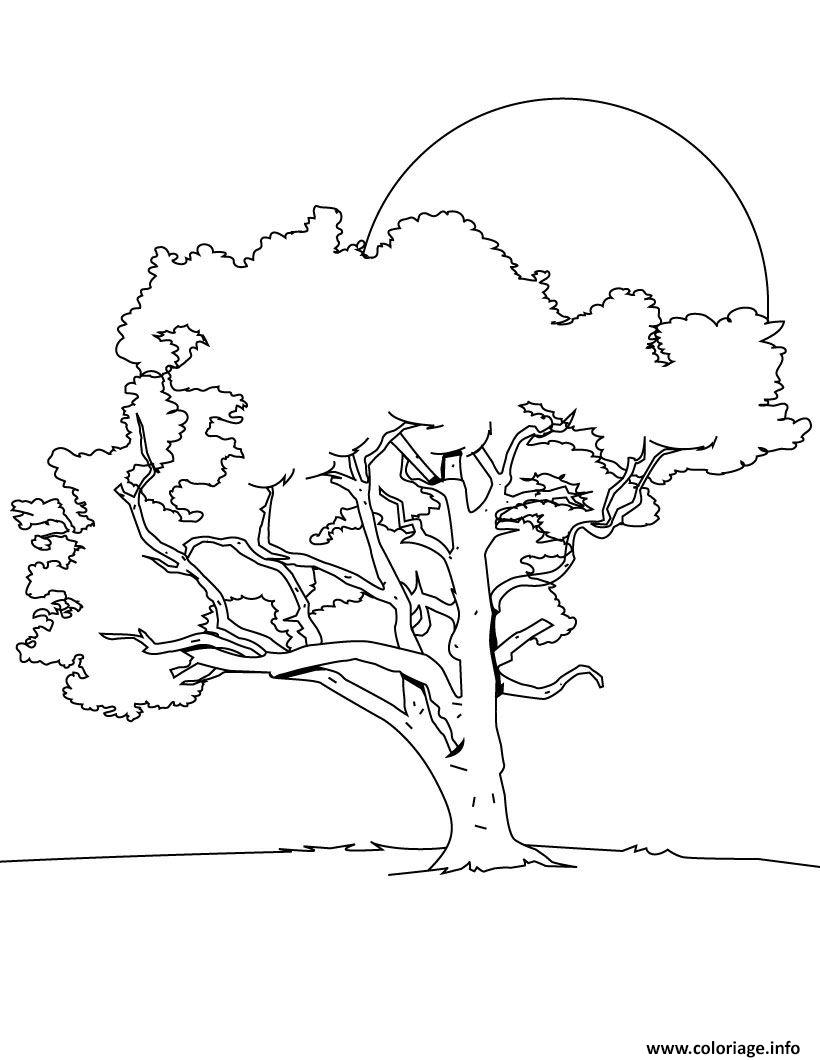 Photo Coloriage Arbre.Coloriage Arbre 6 Jecolorie Com