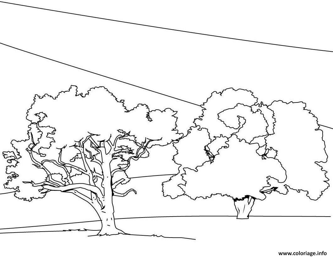 Dessin arbre 114 Coloriage Gratuit à Imprimer