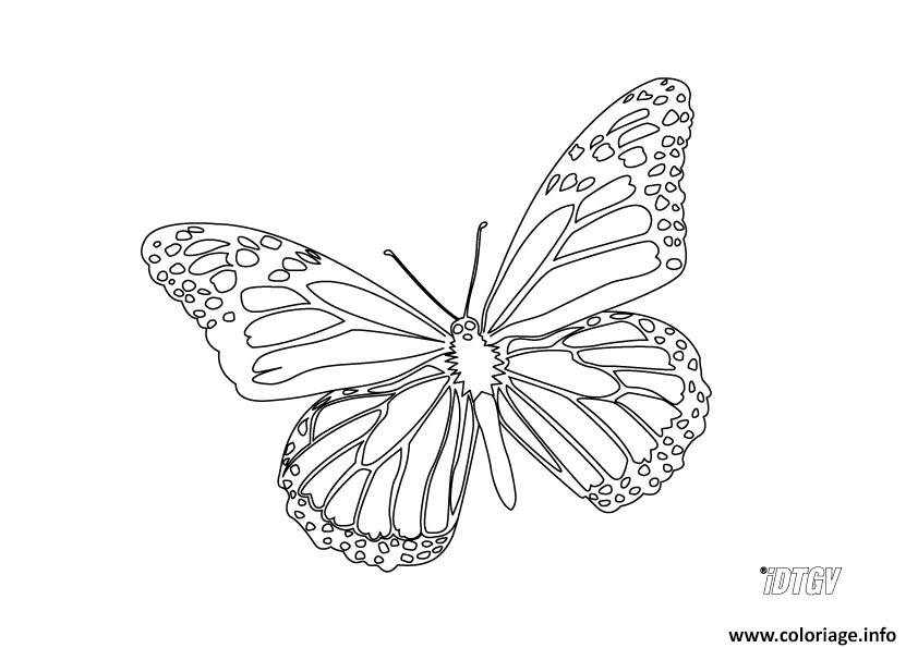 Coloriage papillon 135 dessin - Image papillon a colorier ...