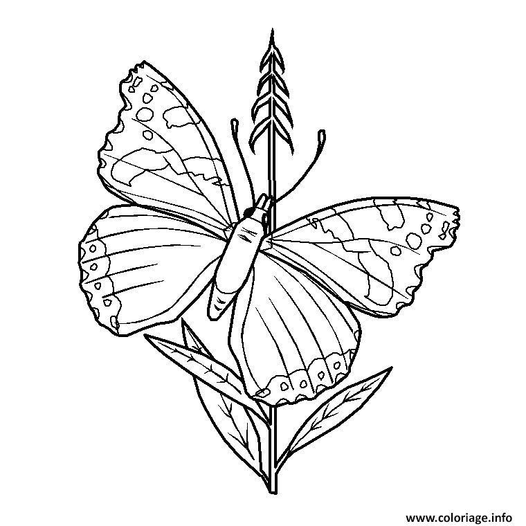 Coloriage De Mandala Papillon Pour Colorier