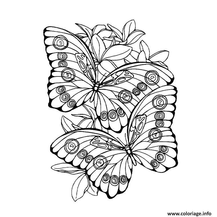 Coloriage Papillon 190 dessin
