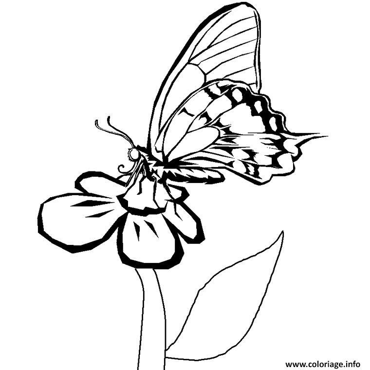 Coloriage papillon fleur dessin - Colorier une fleur ...