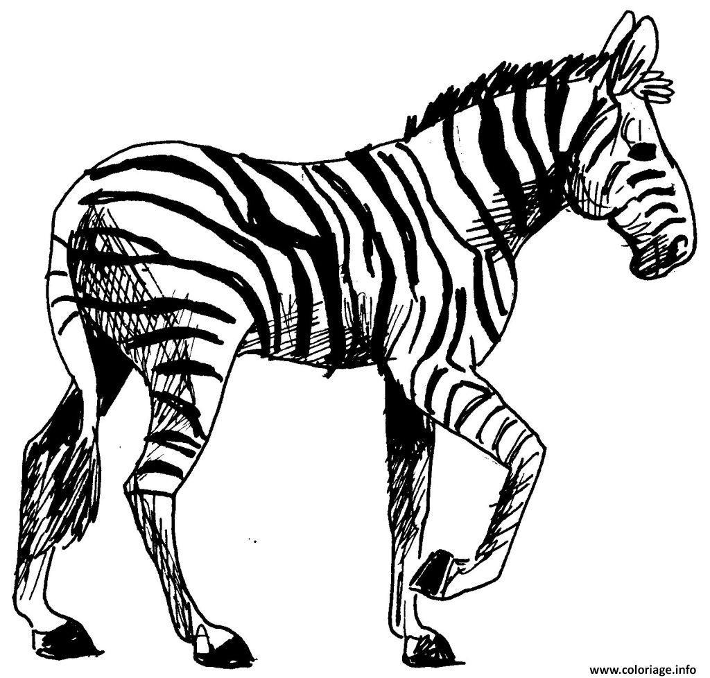 Coloriage Zebre 22 Jecolorie Com