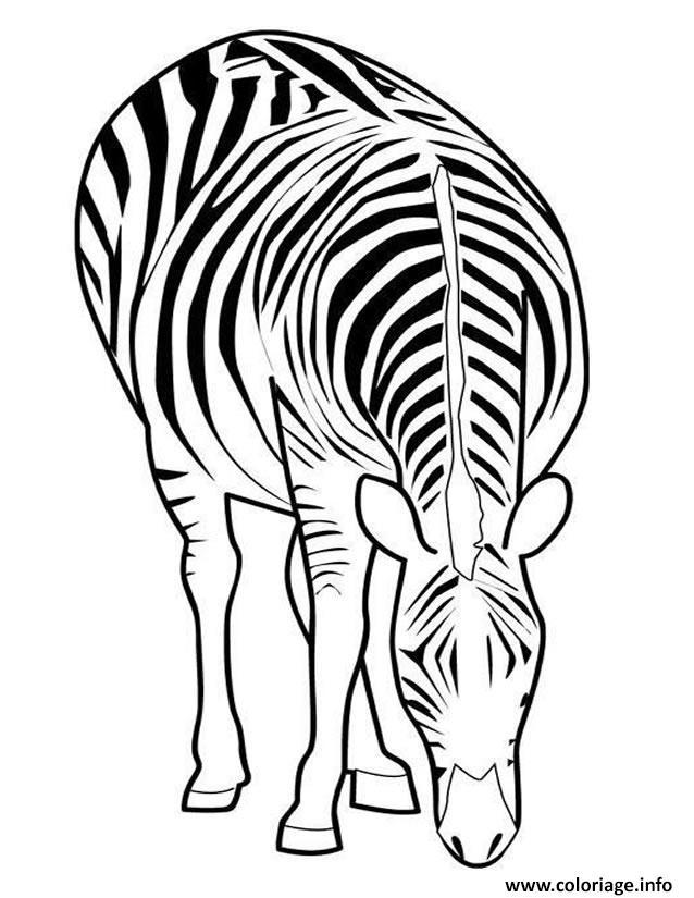Coloriage zebre 30 - Zebre a dessiner ...