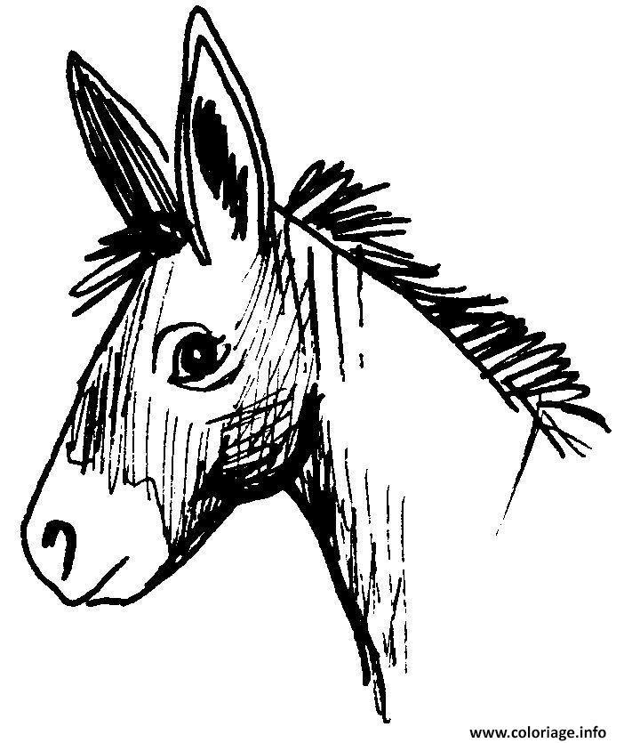 Coloriage portrait ane cousin cheval dessin - Dessiner un ane ...