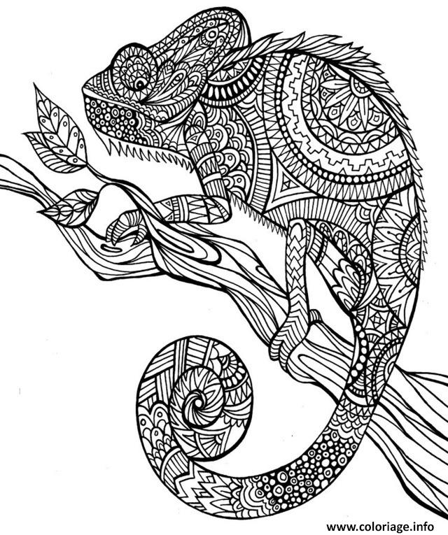 Coloriage anti stress animaux jungle - Coloriage animaux de la jungle ...