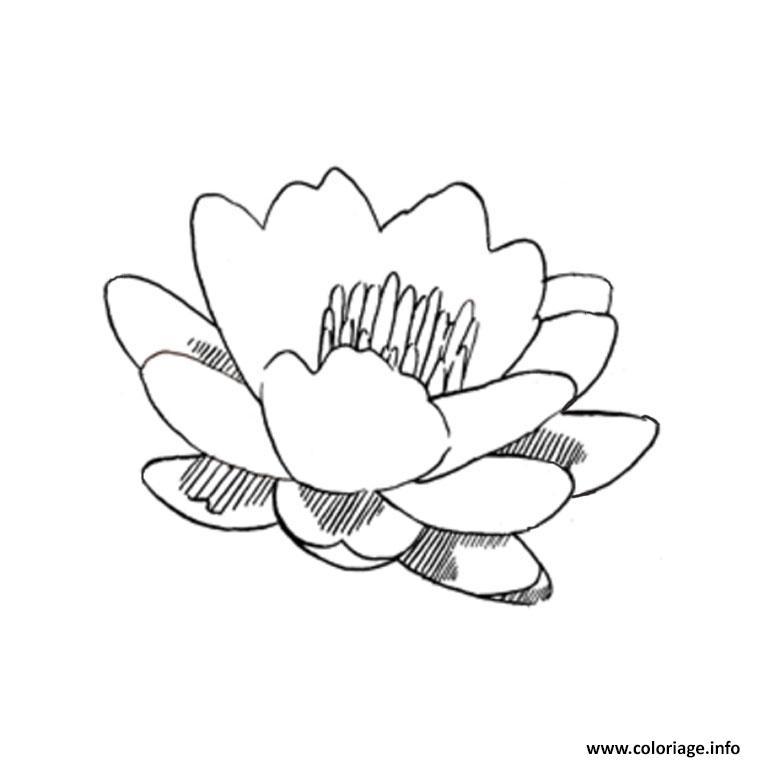 Coloriage Fleur De Lotus Dessin