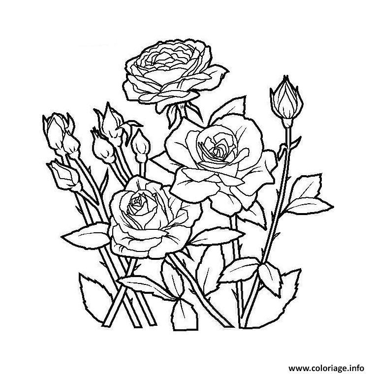 Coloriage Jardin De Fleurs dessin