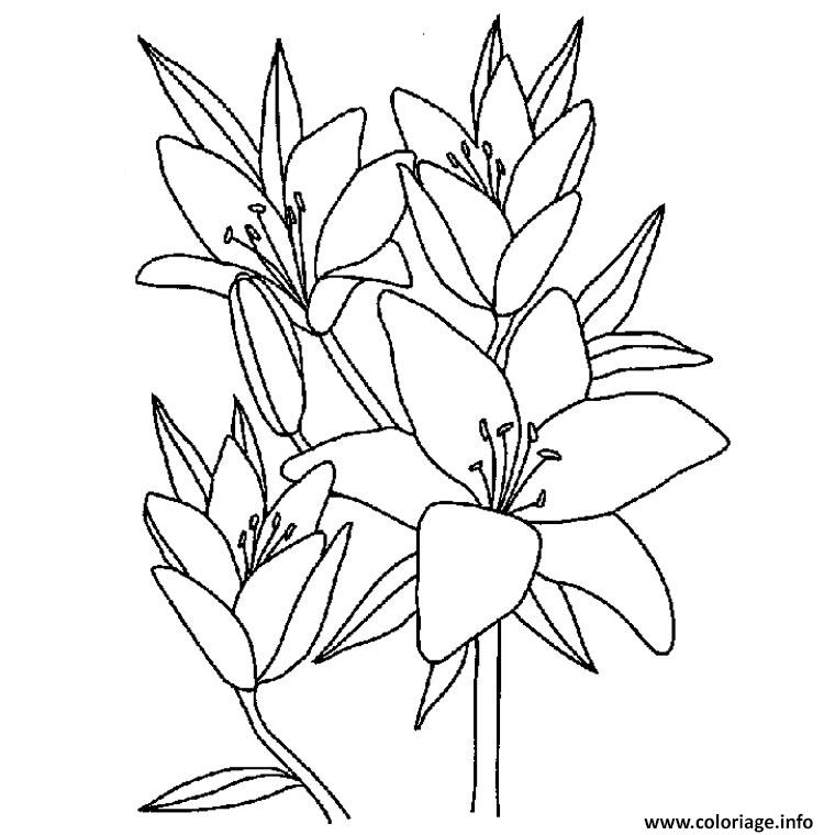 Coloriage Fleur De Vanille Dessin