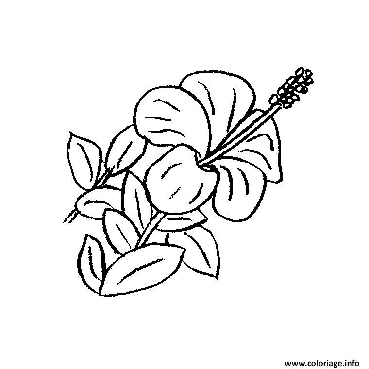 Coloriage fleur hawaienne dessin - Coloriage hawaienne ...